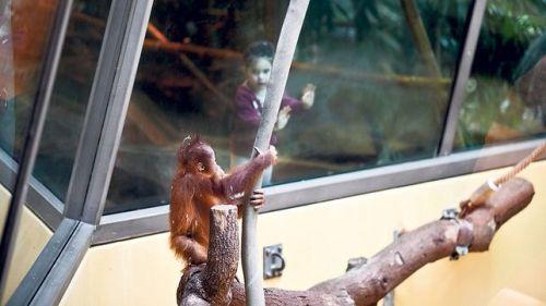 orang-utan-und-maedchen-zoo-zuerich